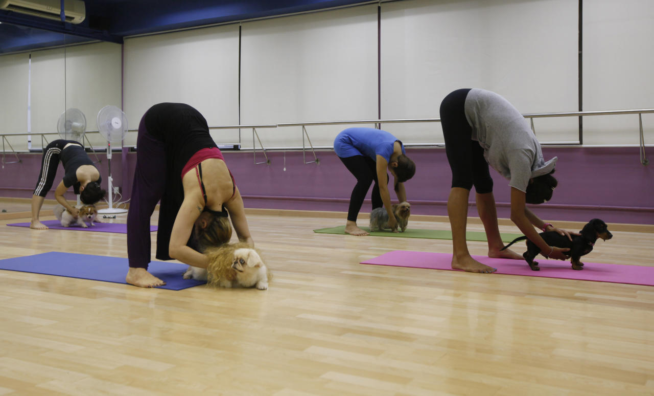 """A yoga instructor Suzette Ackermann, second from left, and her students do Dog Yoga or """"Doga"""" exercises at a studio in Hong Kong, Thursday, July 14, 2011. Doga is a new field of yoga for dogs and their owners. (AP Photo/Kin Cheung)"""