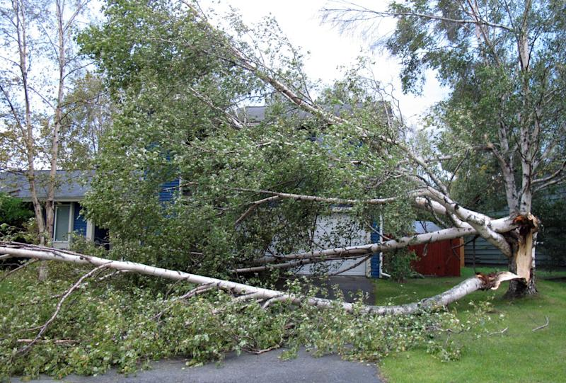 A tree falls in front of a house along Pioneer Drive in east Anchorage, Alaska, on Wednesday, Sept. 5, 2012. A massive windstorm uprooted trees, knocked out power and closed schools in Anchorage. (AP Photo/Mark Thiessen)