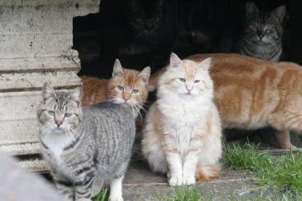"<div class=""caption-credit"">Photo by: Flickr</div><div class=""caption-title""></div><b>Cars and Feral Cats</b> <br> Cats are particularly vulnerable to the cold and can freeze to death. They are also crafty and smart and will do what they have to do to stay warm and alive. When left outside, <a rel=""nofollow"" href=""http://www.alleycat.org/winterweather"" target=""_blank"">many cats seek to find warmth in car hoods and engines</a>, and can easily be killed when cars are turned on. Take a peek under your hood and tires before turning on your car."
