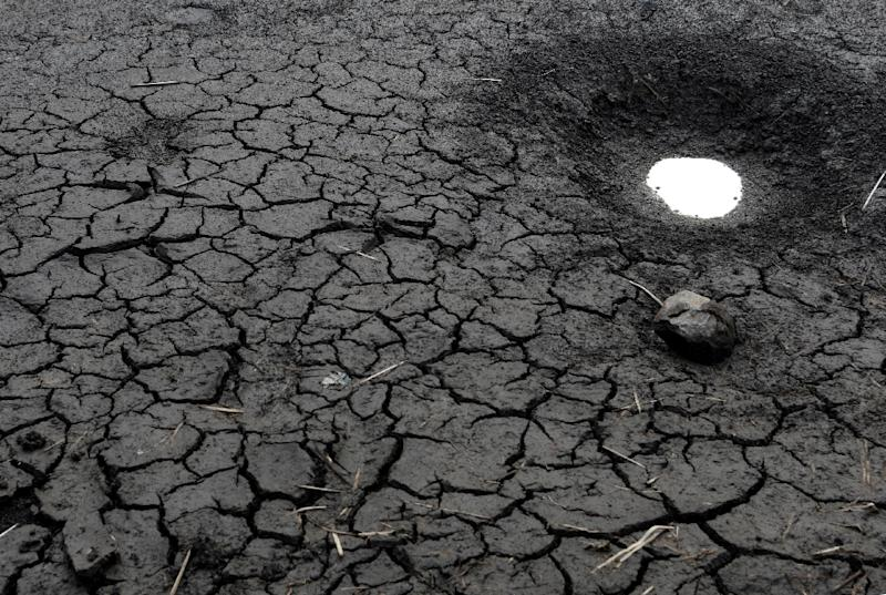 A world that heats up by 2C (3.6 degrees Fahrenheit) could see mass displacement due to shortages of food and fresh water and the loss of animal and plant species at an accelerated speed (AFP Photo/Orlando SIERRA)