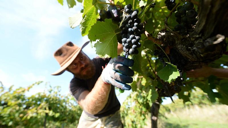Aust wine exports to China pass $1bn