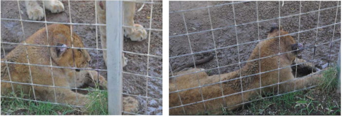 Two images of Nala provided by the U.S. Attorney's Office.  / Credit: Handout / U.S. Attorney's Office