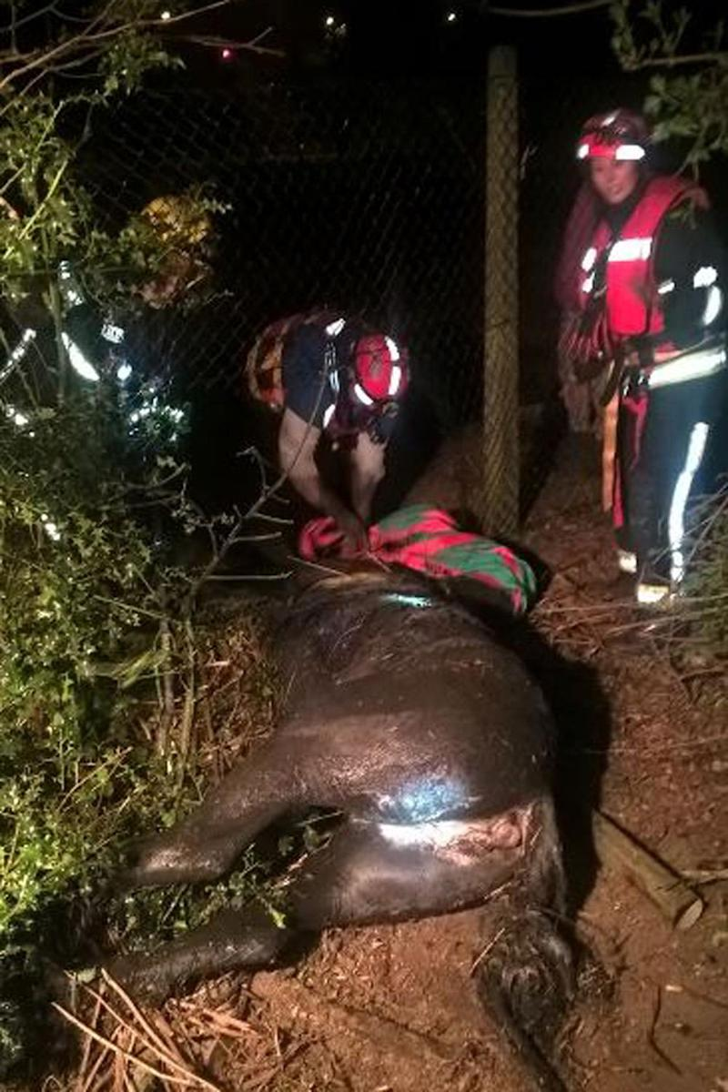 Dramatic rescue: Fire crews pulled a horse from a ditch in Beckton (LFB)