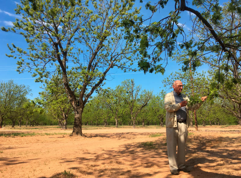 US pecan growers seek to break out of the pie shell