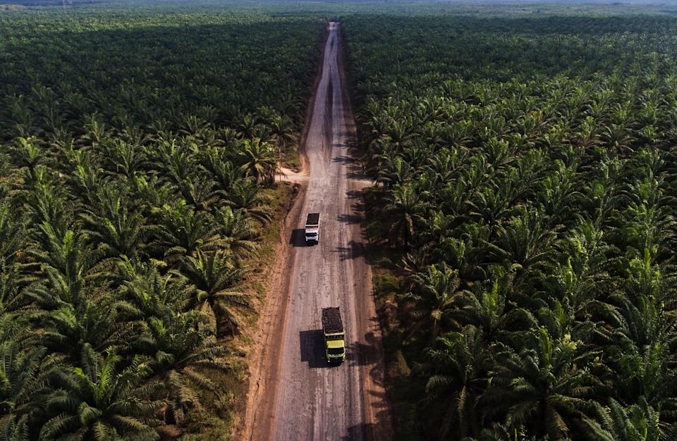 A large palm oil plantation in Indonesia. This incredibly biodiverse country lost about 289,000 acres of forest to palm oil production every year between 1995 and 2015. (Photo: Afriadi Hikmal via Getty Images)