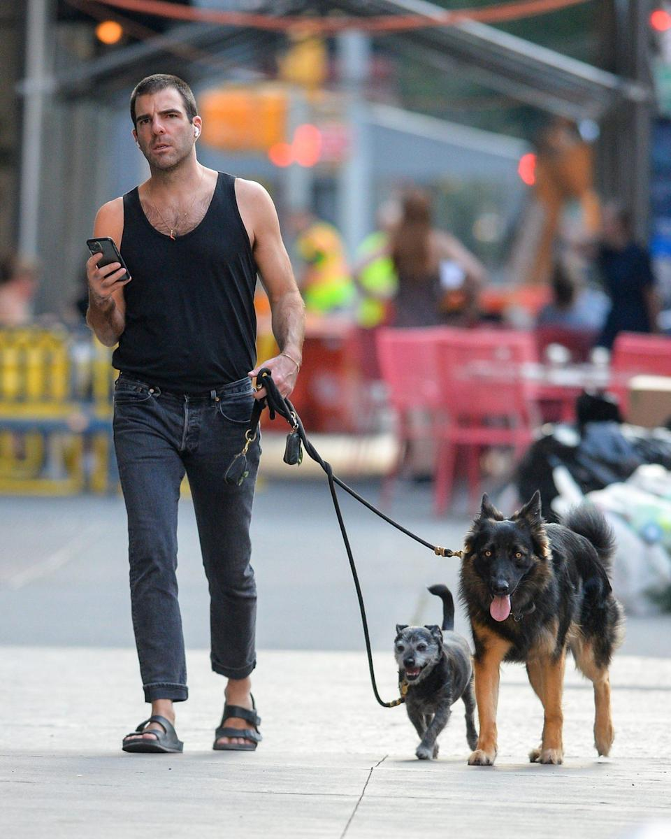<p>Zachary Quinto walk his dogs in downtown N.Y.C. on July 27. </p>