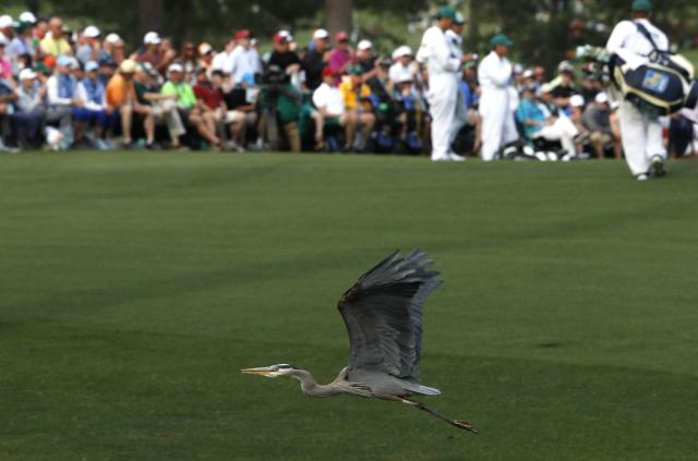 A great blue Heron flies at Augusta National during first round play of the 2018 Masters golf tournament at the Augusta National Golf Club in Augusta, Georgia, U.S., April 5, 2018. REUTERS/Jonathan Ernst