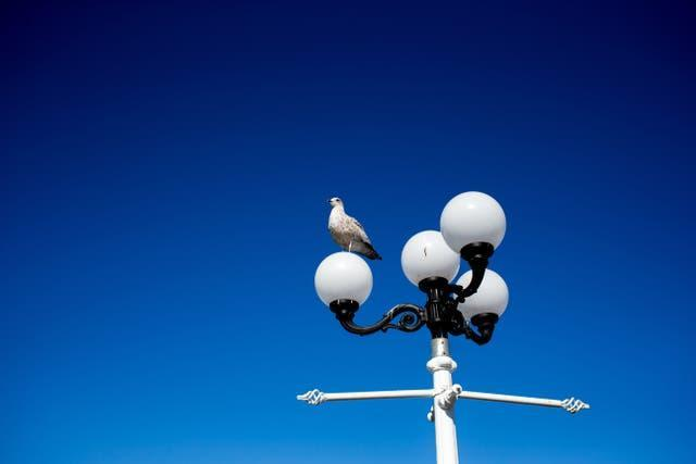 A bird and a lamppost