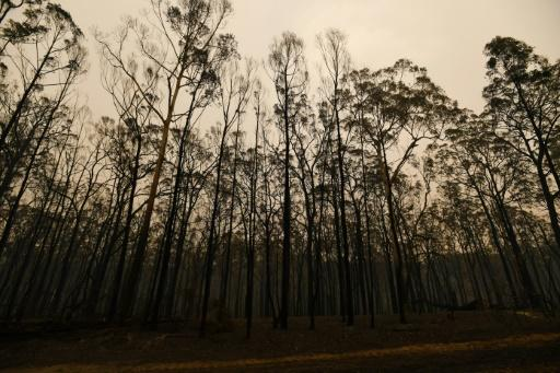 Months of deadly bushfires have engulfed huge swathes of the Australian countryside