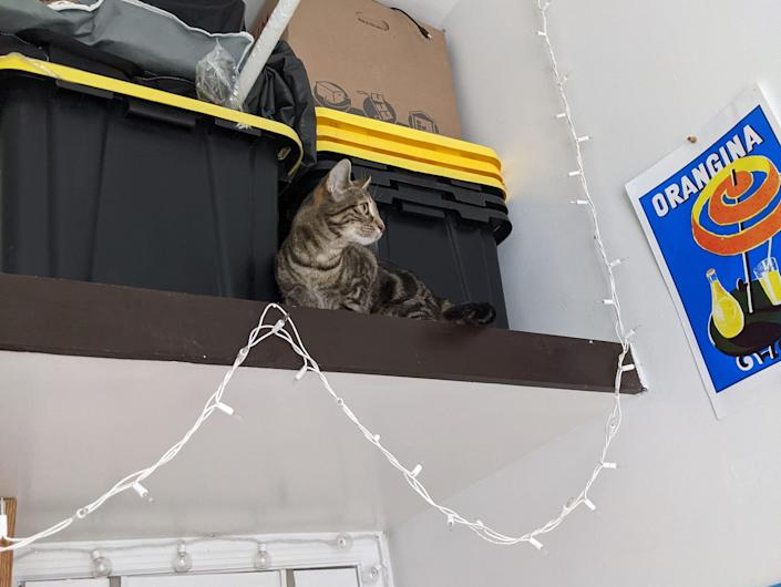 A loft space with storage boxes and a cat