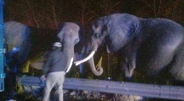 The elephants have since arrived at their retreat. Source: Chattanooga Fire Department
