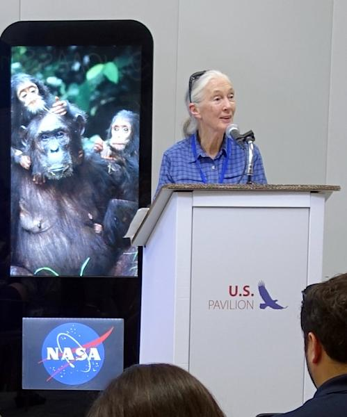British primatologist Jane Goodall and scientists have signed an open letter expressing concern about the use of gene drives in military, agriculture and conservation (AFP Photo/Kerry Sheridan)