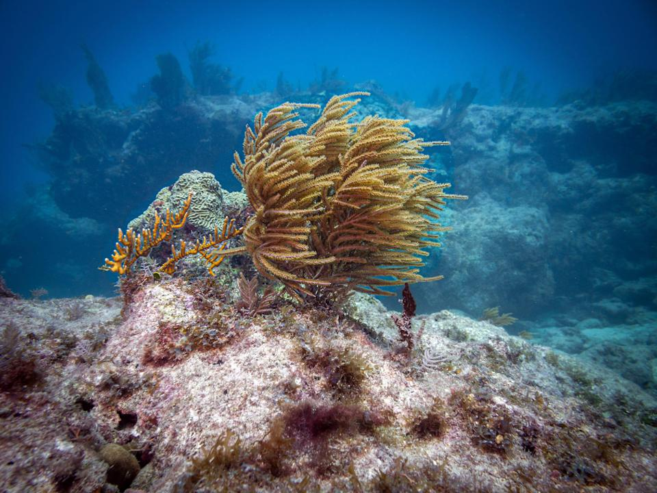Divers can find abundant sea life, living coral and even a statue of Jesus at Florida's John Pennekamp Coral Reef State Park.