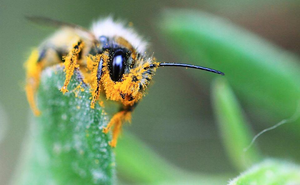 <p><strong>Honey Bee</strong><br><br>Sweet! Another state recognized these un-bee-lievably important insects. <br></p><p><strong><br></strong></p>