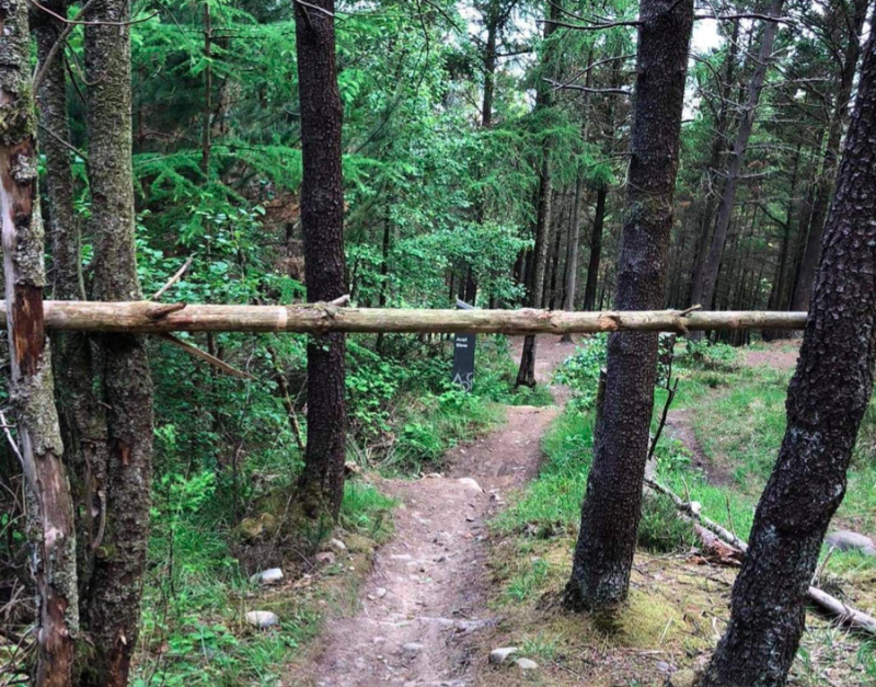 The trap was set across the track with woven branches within it that were fixed horizontally. (Wales News)