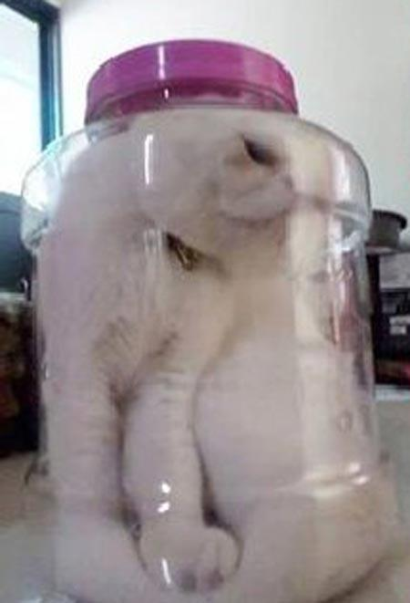 Photo of pet cat Kiki put in a plastic bottle angered online citizens after it was posted on Facebook. This photo has been taken down.(Online screengrab)