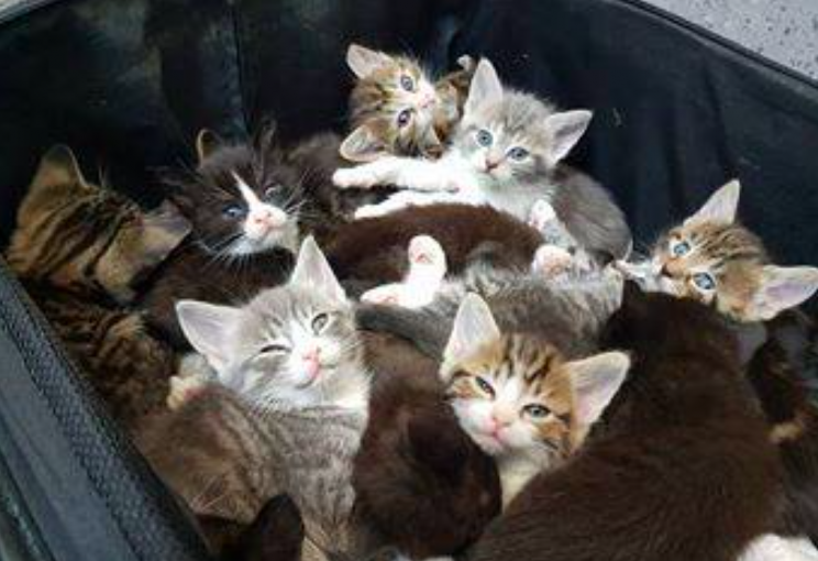 The kittens were stuffed into the suitcase at the side of the road (Facebook/Cats Protection Hornchurch)