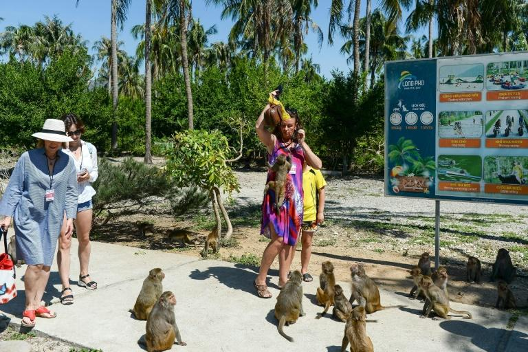 Macaques at Monkey Island in Nha Trang city, Vietnam, are known for snatching bags of crisps, water bottles, cookies and crackers from uneasy tourists
