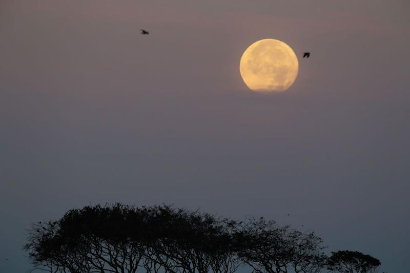 This year's Harvest Moon to rise Monday night