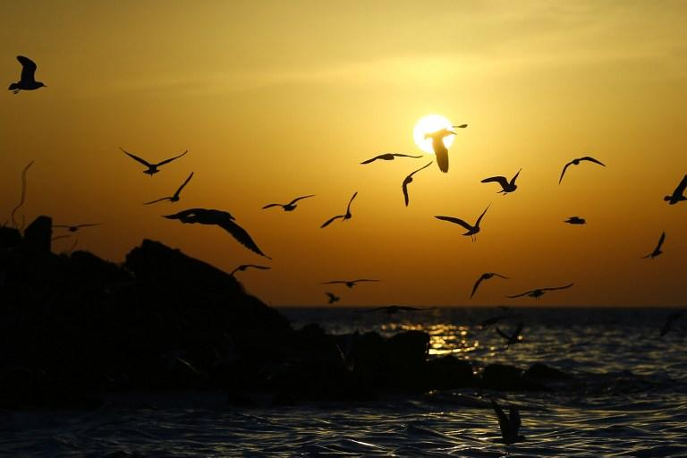 <p>Seagulls fly off the coast of Gaza City at sunset on March 8, 2017. / AFP PHOTO / MOHAMMED ABED </p>