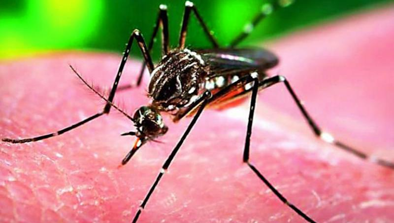Zika Virus Spreads to Gujarat, Woman Tests Positive In Ahmedabad