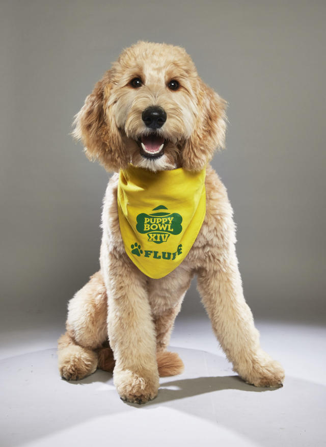 <p>Team: Fluff<br>From: Green Dogs Unleashed<br>(Photo: Animal Planet) </p>