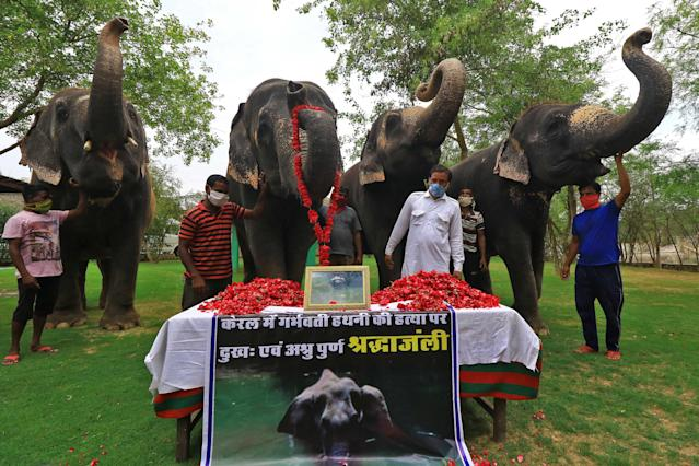 Elephant Village Development Society President Ballu Khan along with elephants and mahouts pay tribute to a wild pregnant elephant who recently killed in Kerala, at Elephant Village in Jaipur,Rajasthan,India, June 4, 2020. (Photo by Vishal Bhatnagar/NurPhoto via Getty Images)