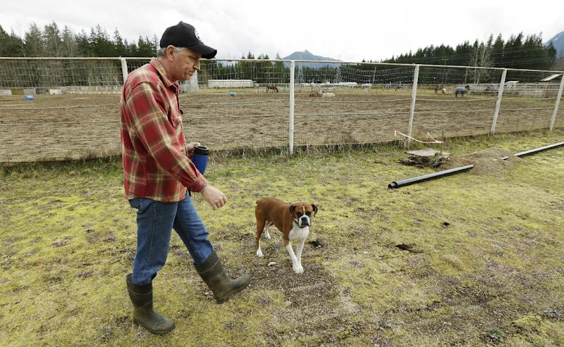 Tom Gent, and his dog Tiny, walk Wednesday, March 26, 2014, past the rodeo area of the Darrington Fairgrounds in Darrington, Wash., where Gent is caring for horses who were displaced by the massive mudslide that hit the area last Saturday. (AP Photo/Ted S. Warren)