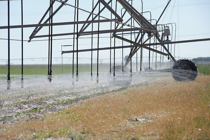 """<span class=""""caption"""">A center-pivot sprinkler with precision application drop nozzles irrigates cotton in Texas.</span> <span class=""""attribution""""><a class=""""link rapid-noclick-resp"""" href=""""https://commons.wikimedia.org/wiki/File:Center_pivot_sprinkler_with_low_energy_precision_application_drop_nozzles_irrigates_cotton_growing_in_wheat_residue_used_as_a_cover_crop._(24486394864).jpg"""" rel=""""nofollow noopener"""" target=""""_blank"""" data-ylk=""""slk:USDA NRCS/Wikipedia"""">USDA NRCS/Wikipedia</a></span>"""