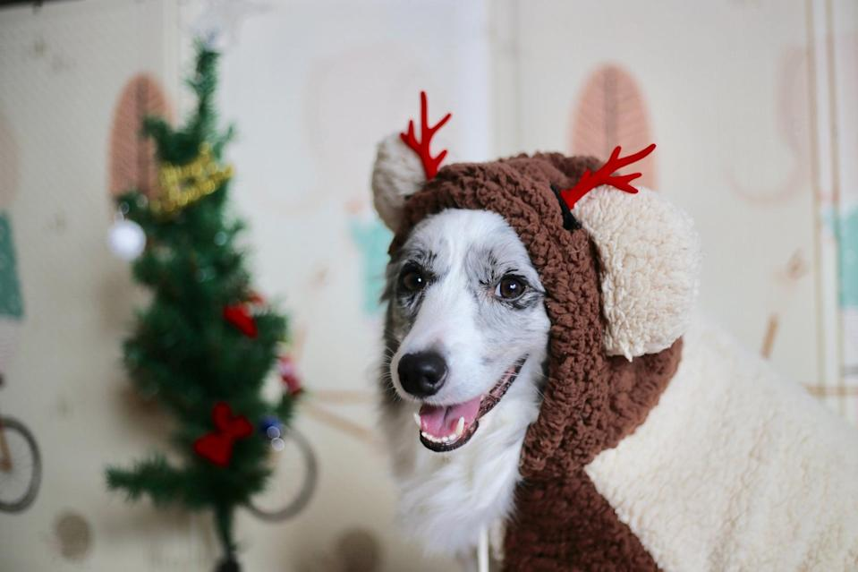 """<p>You'll have a very merry Christmas with this sweet pup as your Zoom backdrop.</p> <p><a href=""""http://media1.popsugar-assets.com/files/2020/12/21/846/n/1922507/73b5c83b900fa2bd_minnie-zhou-ChSEhG-aI-o-unsplash/i/Download-Zoom-background-image-here.jpg"""" class=""""link rapid-noclick-resp"""" rel=""""nofollow noopener"""" target=""""_blank"""" data-ylk=""""slk:Download Zoom background image here."""">Download Zoom background image here.</a> </p>"""