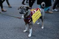 <p>A four legged marcher wears a sign poses for a photo during a march in New York, Jan. 29, 2017, protesting President Donald Trump's immigration order. (Gordon Donovan/Yahoo News) </p>