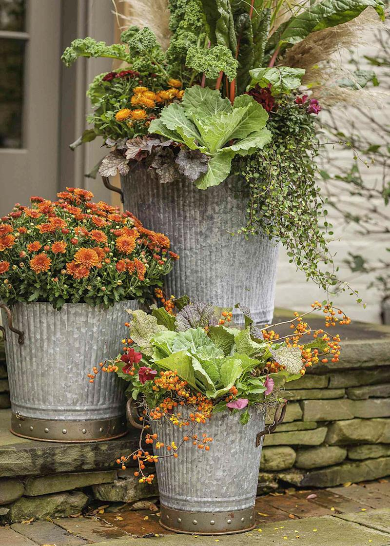 Creative Ideas for Decorating with Mums Outdoors