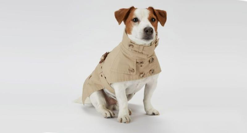 Ralph Lauren Dog Trench Coat, $40, poshmark.com (Photo: Poshmark)
