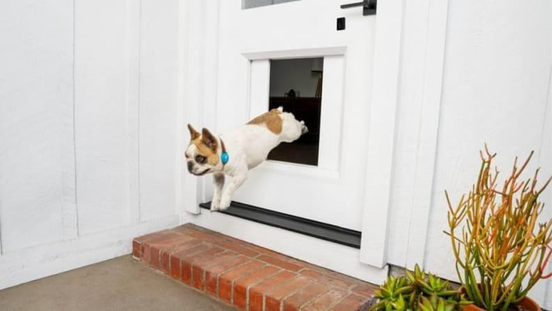 Let your pet go in and out as they please.