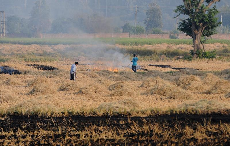 Farmer burn paddy stubble at Kauli village, on October 12, 2020 in Patiala, India. (Photo by Bharat Bhushan/Hindustan Times via Getty Images)