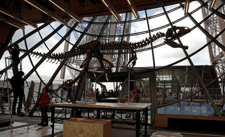 Workers reconstruct dinosaur fossil at the Eiffel tower, in Paris, France, June 2, 2018 ahead of its auction on Monday. REUTERS/Philippe Wojazer