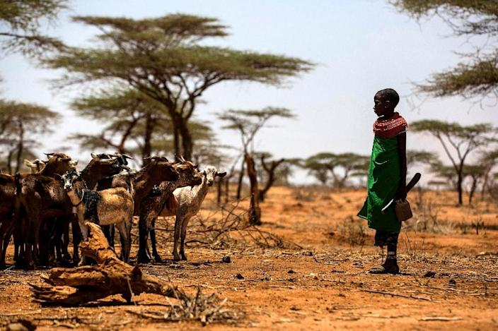 The world is currently on course for a global warming of four degrees Celsius, which will cause widespread drought (AFP Photo/Luis TATO)