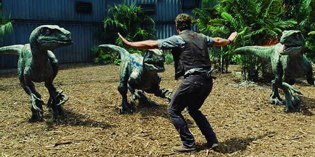 No animal hate here: Chris Pratt is a friend to the raptors in 'Jurassic World'. Photo: Universal Pictures