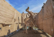 In this image released by World Press Photo, Thursday April 15, 2021, by Ami Vitale for CNN, titled Rescue of Giraffes from Flooding Island, which won the first prize in the Nature Singles category, shows A Rothschild's giraffe (Giraffa camelopardalis rothschildi) is transported to safety in a custom-built barge from a flooded Longicharo Island, Lake Baringo, in western Kenya, on Dec. 3, 2020. (Ami Vitale for CNN, World Press Photo via AP)
