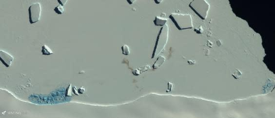A satellite image showing stained patches of ice – evidence of a penguin colony (British Antarctic Survey/Copernicus Sentinel-2)