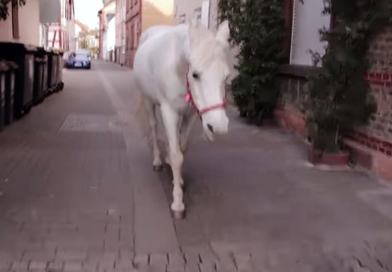 Jenny happily walks the same route after being let out of her stable in the morning. Source: YouTube/Equine Stories