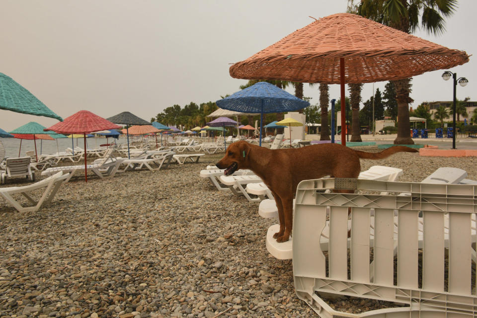 An abandoned dog stands on the Oren beach shortly after people were evacuated by boat after wildfires reached the nearby Kemerkoy Power Plant, a coal-fueled power plant, in Milas, Mugla in southwest Turkey, early Thursday, Aug. 5, 2021. (AP Photo)