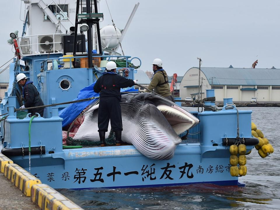 Overfishing has pushed whale populations to the brink of extinction (AFP via Getty Images)