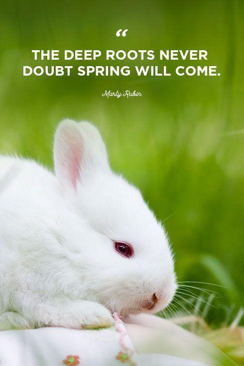 """<p>""""The deep roots never doubt spring will come.""""</p>"""