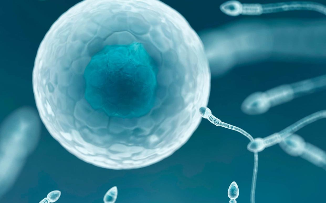 The study is the first of its kind to identify an association between shorter penile length and male infertility - Science Photo Library RF