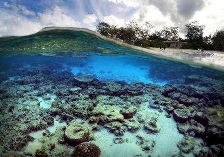 Wider Image - Great Barrier Reef At Risk