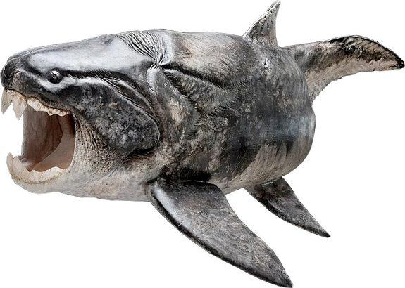 The armored fish <em>Compagopiscis</em>, which researchers have discovered sported teeth, would have looked something like the closely related species <em>Dunkleosteus</em> (shown here in a reconstruction) that also had the same kind of teeth.