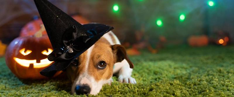 Pet costumes are a new and growing Halloween trend