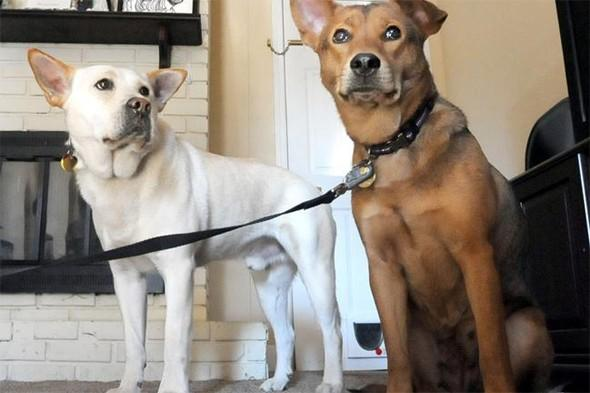 Dog travels 10 miles in the cold to find his mate
