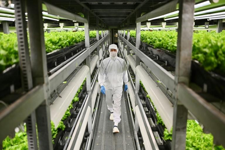 In Japan, vertical farming is taking offing as traditional methods face a double threat from the ageing population and migration towards the cities